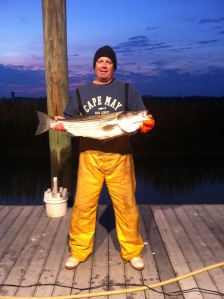 Keith's Striper that ate a bunker chunk in the DE bay